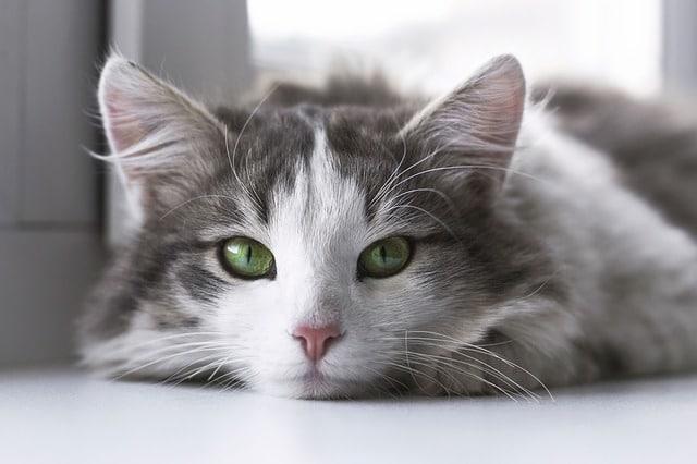 愛猫の健康のために知ってほしい!キャットフードの選び方&おすすめ7選