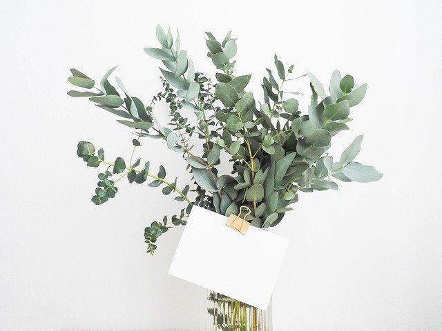 育てやすい観賞植物写真