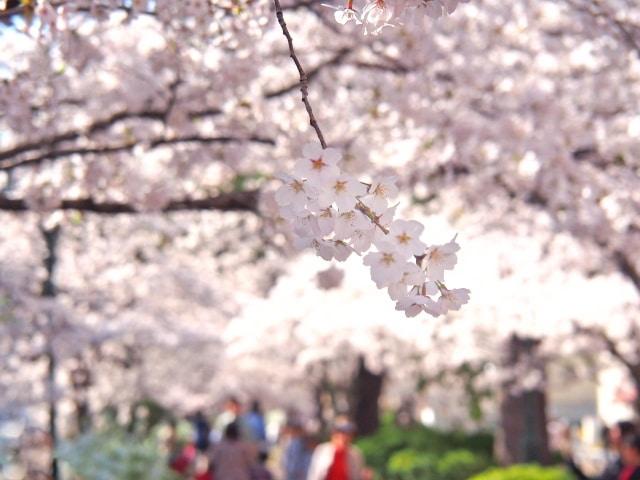 兵庫県のお花見スポット10選!穴場で桜を見るならココ♪
